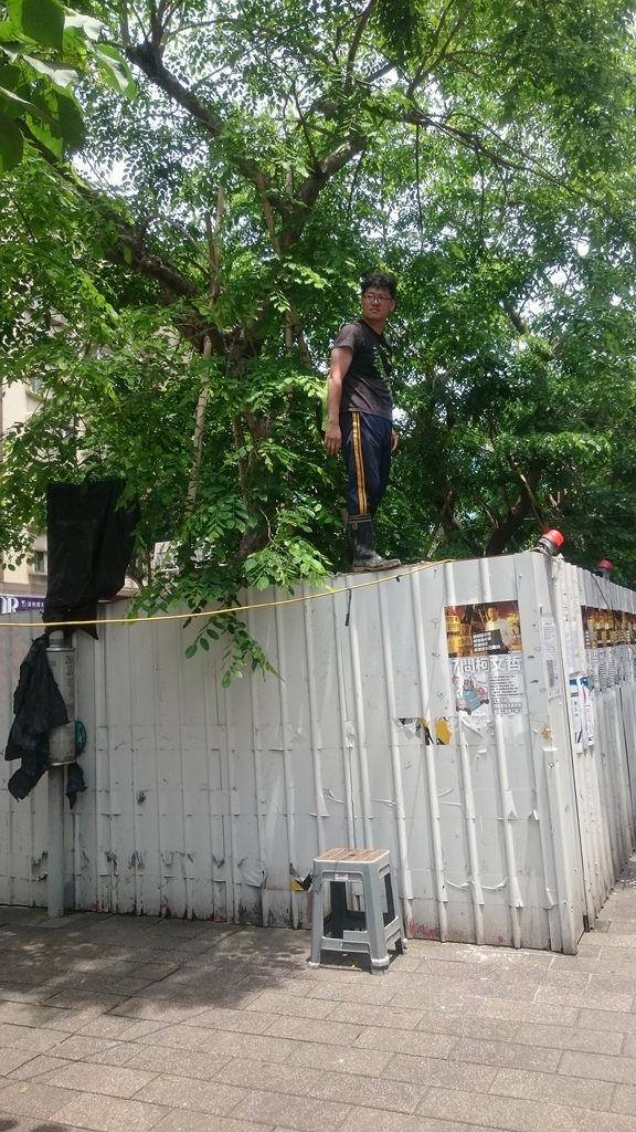 大巨蛋移樹 - 游藝等護樹志工,警戒著包商的一舉一動