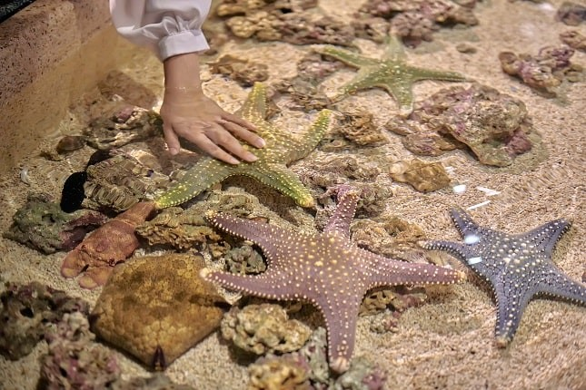 圖:遠雄海洋公園_互動生態池
